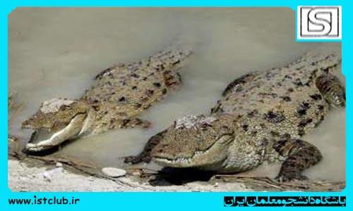 اینجا مردم و تمساحها آب آشامیدنیشان را با هم قسمت میکنند